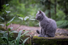 The cat in the jungle. The little cat in the jungle Stock Photos