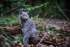 The cat in the jungle. The little cat in the jungle Royalty Free Stock Photography