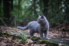 The cat in the jungle. The little cat in the jungle Stock Image