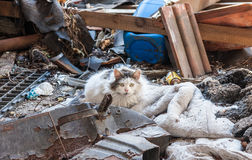 Cat in junk yard. Stray, confrontational looking cat in junk yard Stock Photo