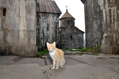 Cat, keeper of Holy Monastery Haghpat in Armenia. Haghpat Monastery, also known as Haghpatavank is a medieval Armenian monastery complex in Haghpat, Armenia royalty free stock photo