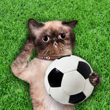 Cat keeps the ball. Cat lie on the grass Royalty Free Stock Photos