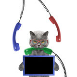Cat keeps frame in its paws and phone in its mouth. Isolated on white background Royalty Free Stock Images
