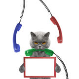 Cat keeps frame in its paws and phone in its mouth. Isolated on white background Royalty Free Stock Photos