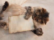 The cat keeps paws card for an inscription Stock Photos
