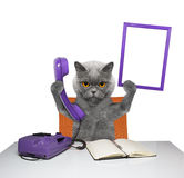 Cat keeps phone and frame Royalty Free Stock Photo