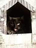 Cat in a kennel Royalty Free Stock Image