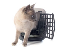 Cat in kennel Stock Image