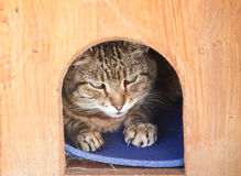 Cat in a Kennel Royalty Free Stock Photography