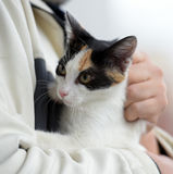 Cat kept on hand Royalty Free Stock Photo