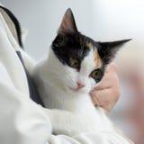 Cat kept on hand Stock Image