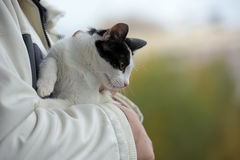 Cat kept on hand Royalty Free Stock Images