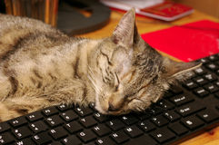 Cat and keyboard. Tabby cat sleeping on a computer keyboard Stock Photography
