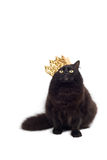 Cat king. Black cat wearing crown isolated Royalty Free Stock Photography
