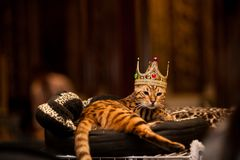 Cat King Photographie stock libre de droits