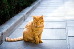 Cat_king_style Royalty Free Stock Photo