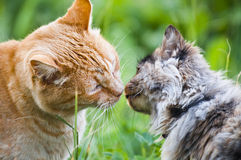 Cat kiss. Adorable scene of cat kiss Stock Photography