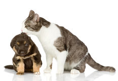 Cat kisses a puppy. Isolated on a white background stock photos