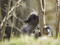 Cat kissing tree Stock Images