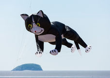 Cat at Kite Festival Weston-super-Mare Somerset Royalty Free Stock Photos