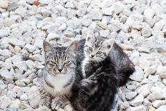 Cat and kitten Stock Images