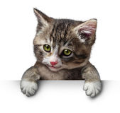 Cat Kitten Blank Sign Royaltyfri Bild