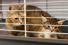 Cat and kitten in a cage of a shelter Stock Photo