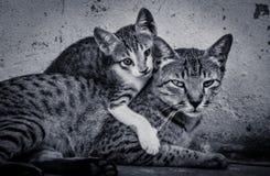 Cat and kitten Stock Photos