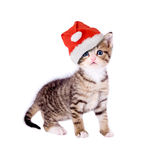 Cat / kitten with Christmas hat Stock Photos