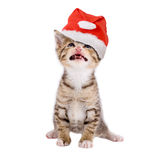 Cat / kitten with Christmas hat, isolated Royalty Free Stock Photos