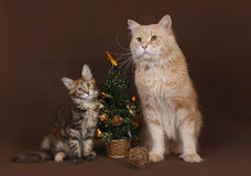 Cat and kitten with a Christmas tree. Stock Photos