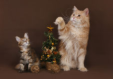 Cat and kitten with a Christmas tree. Stock Photography