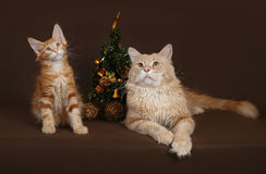 Cat and kitten with a Christmas tree on a brown Royalty Free Stock Images