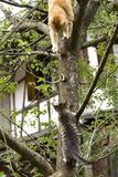 Cat and Kitten climbing on a Tree Stock Image