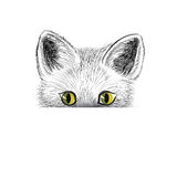 Cat. Kitten face sketch. Puppy head isolated. Royalty Free Stock Images