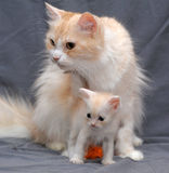 Cat with a kitten Stock Photo