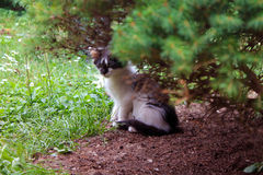 Cat. Kitten in the garden under tree Royalty Free Stock Photo