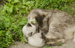 Cat with kitten in the grass Royalty Free Stock Images