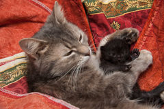 Cat and Kitten Stock Photo