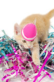 Cat kitten with hat Stock Images