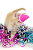 Cat kitten with hat Royalty Free Stock Image