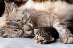 Cat and kitten hug Stock Photography