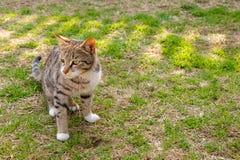 Cat Kitten inställning på gräsmatta arkivbild