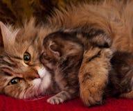 Cat with kitten Stock Photo