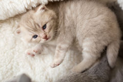 Cat and kitten lying and hugging together stock image