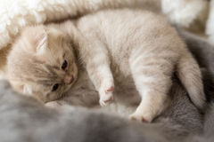 Cat and kitten lying and hugging together stock photo