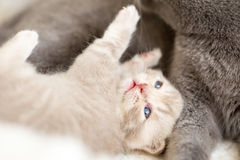 Cat and kitten lying and hugging together royalty free stock photos