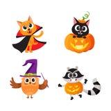 Cat, kitten owl and raccoon in Halloween costumes Stock Photo