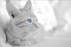 Cat kitten photo - Looking out royalty free stock photography