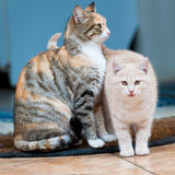 Cat and kitten pink Royalty Free Stock Photos